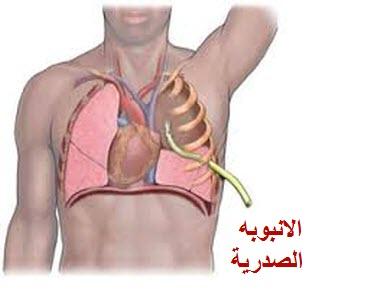 الأنبوبة الصدرية